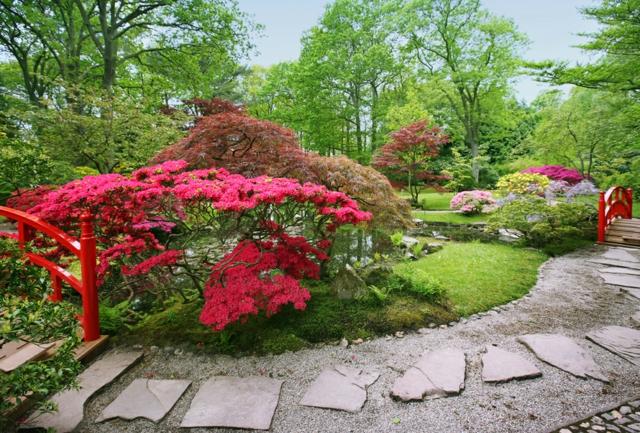 La beaut exotique du jardin japonais - Petit jardin japonais photo ...