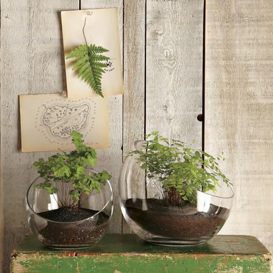 Mini jardini res et pots d int rieur aux herbes aromatiques - Plante dans pot en verre ...
