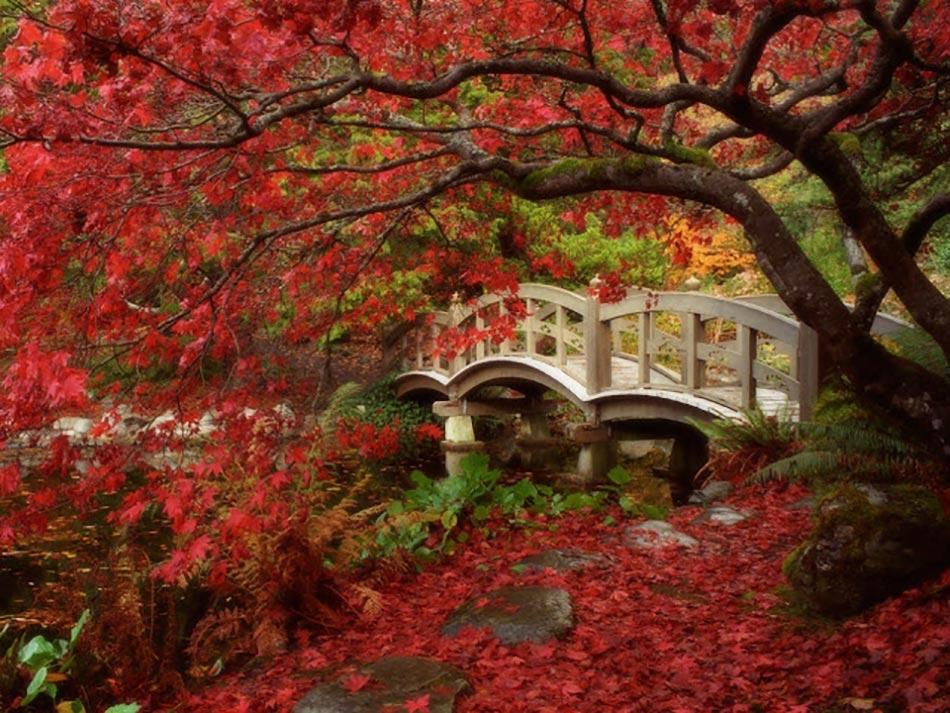 Jardin Japonais Université British Columbia
