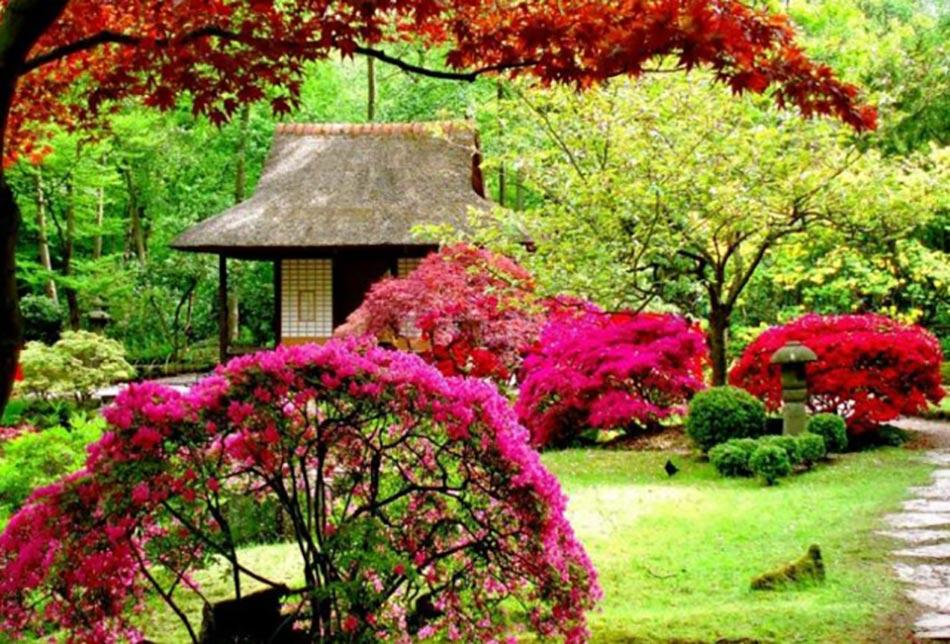La beaut exotique du jardin japonais - Beau petit jardin ...