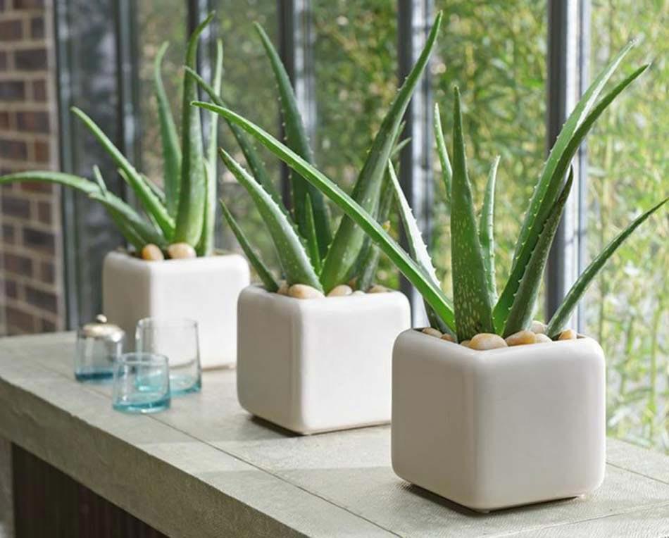 5 plantes d int rieur pour d corer la chambre coucher et for Plantes d interieur decoration