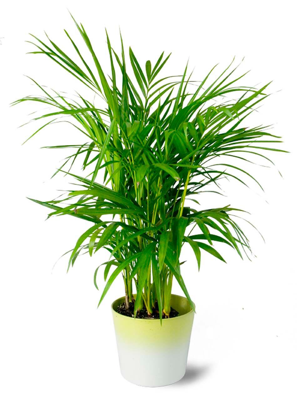 D coration salle de bain l aide d utiles et belles - Plante verte pour salle de bain ...
