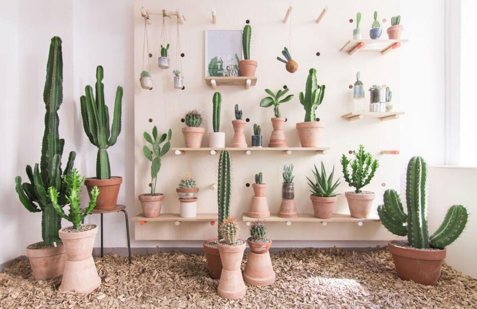 Deco Cactus Une Tendance Sympa Pour Nos Maisons Design Feria