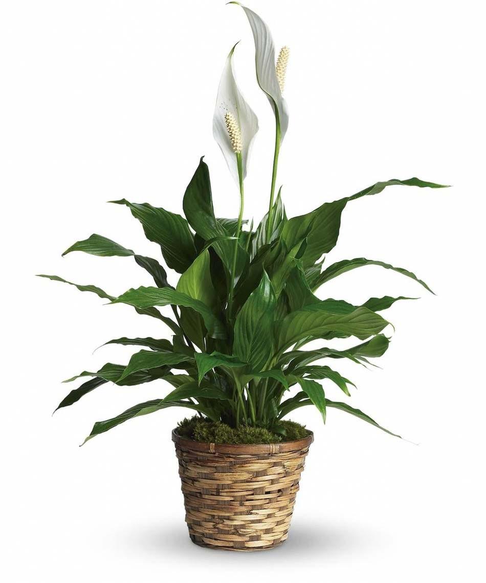 Décoration salle de bain à l'aide d'utiles et belles plantes d ...