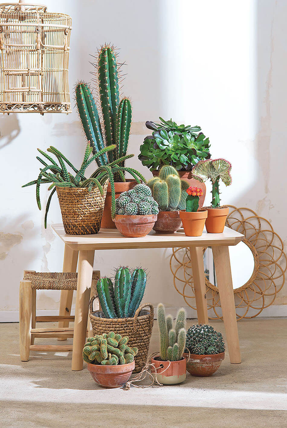 d co cactus une tendance sympa pour nos maisons design. Black Bedroom Furniture Sets. Home Design Ideas