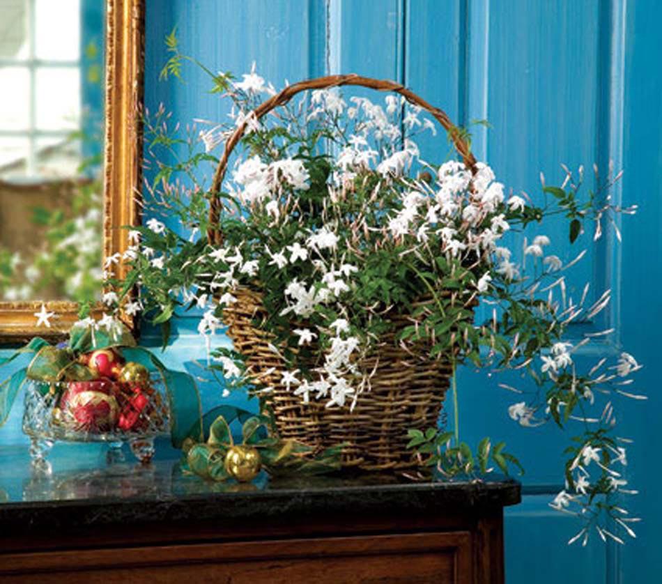 Plantes dans une chambre des fougres vertes et exotiques - Chambre plante ...