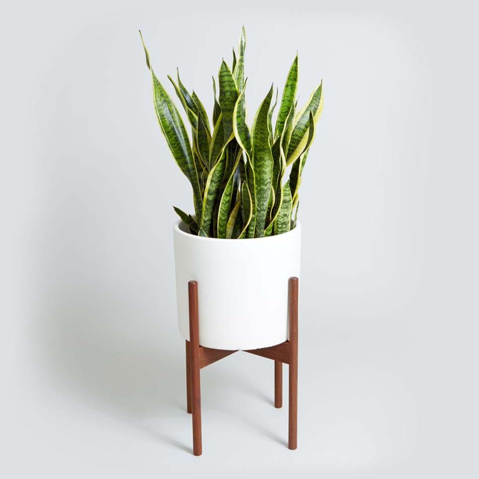 D coration salle de bain l aide d utiles et belles for Plante salle de bain