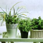 déco plantes purifier l'air chambre intérieur maison