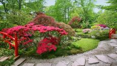jardin exotique japonais