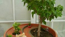 10 réaliser un joli mini jardin