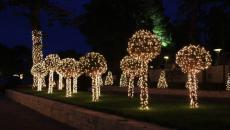 Des arbres joliment éclairés pour un paysage féerique