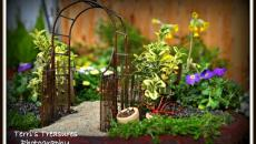 11 réaliser un joli mini jardin