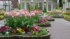 décoration de jardin en fleurs