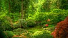 jardin japonais verdoyant