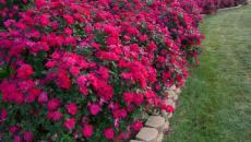décoration de fleurs pour jardin