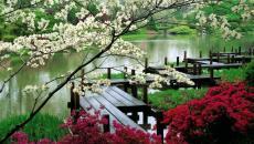 washington parc jardin japonais