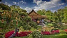 jardin de maison de thé japonaise