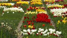 floraison de décoration de jardin