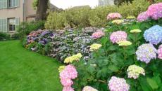 plate-bande de fleurs décorative