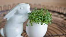 lapin blanc en porcelaine