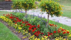 décoration de jardin avec massif fleural