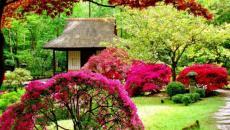 beau jardin japonais
