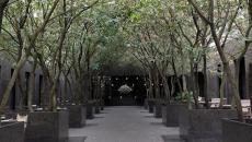 Beau couloir formé par les arbres