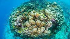 La vie sous marine vue depuis la chambre flottante