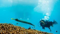 Vue sous l'eau depuis la chambre flottante