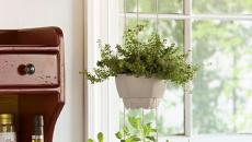 herbes aromatiques en pots blancs