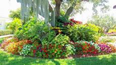 jardin de massifs fleuris décoration