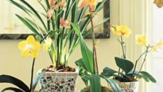 Pots de fleurs aux plantes fleuries