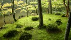 saihouji kokedera parc