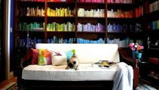 salon déco bibliothèque multicolore