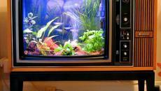Téléviseur devenu aquarium