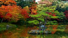 jardin japonais multicolore