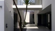 Jardin intérieur paysagiste au palmier