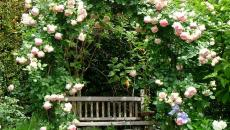 jardin fleuri banc de détente meuble