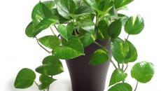 plantes vertes absorbent toxines vapeur salle de bain