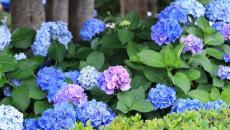 astuce jardinage fleurs outdoor maison