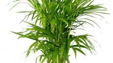 plante d'intérieur pour déco salle de bain moderne