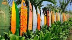 plance surf palissage exotique