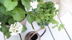 plantes répulsives moustiques jardin
