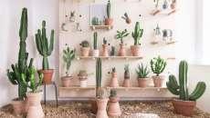 jardinière patio maison déco cactus tendance moderne