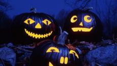 Têtes citrouilles décoratives décoration Halloween