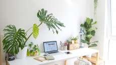 travailler chez soi se sentir bien sans stress plantes vertes
