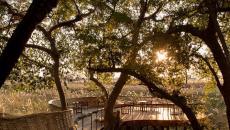 ambiance luxe lodge safari botswana