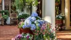 patio rustique déco jardin fleurs couleurs