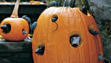 accessoires citrouilles déco Halloween