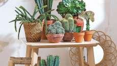 petit jardin intérieur appartement cactus